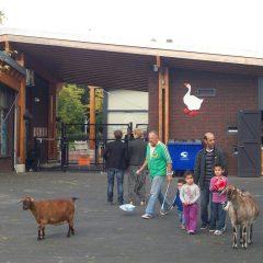 Gemeente Amsterdam West vroeg het Thuismakers collectief om tijdelijk de projectleiding over de kinderboerderij op zich te nemen met als doel de organisatie te hervormen en de samenwerking tussen de verschillende partijen te verbeteren.